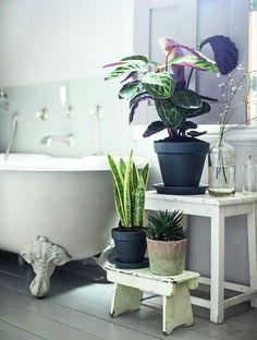 Busca el lugar más adecuado para colocar tus plantas de interior :)