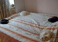 四方を守護するネコ koshki