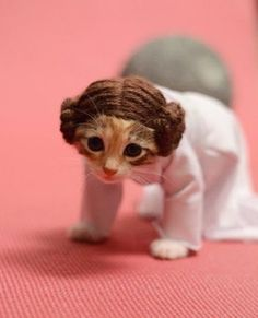 Cats in cosplay, Wendy McKee. Cats dressed as their favourite characters. The Doctor Who ones are great, but this one of Leia from Star Wars is the cat's meow! Kittens In Costumes, Pet Costumes, Animals In Costumes, Cute Cat Costumes, Clever Costumes, Halloween Costumes, Baby Animals, Funny Animals, Cute Animals