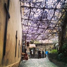 Caminho perfumado em Positano (Costa Amalfitana)