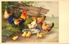 Rooster and Chickens Alfred Mainzer Vintage Postcard. $5.00, via Etsy.