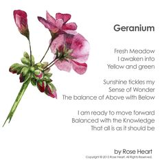 Let this poem about geranium lead you to acceptance and inspire you to take on all of life's challenges with open arms.
