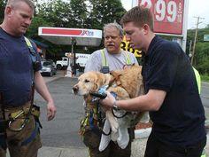 Gloobalteam: Cachorro se joga em frente a ônibus para salvar do...