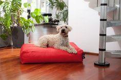 """Aus der Kategorie Betten  gibt es, zum Preis von EUR 64,00  Mit diesem Hundebett DogBed Classic werden Sie ihrem Hund gerecht! Dieses Hundekissen ist gefüllt mit Mikrokügelchen und passt sich so den Bewegungen Ihres Hundes an. Das Hundekissen setzt zudem auf eine hohe Qualität """"Made in Germany""""! Das wasserfeste und schmutzabweisende Hundekissen bietet eine außergewöhnliche Ergonomie - Schlafkomfort und Schonung der Wirbelsäule Ihres Hundes sind somit garantiert. Das besonders…"""