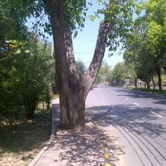 An old tree, a beautiful view of the Mall Road Lahore