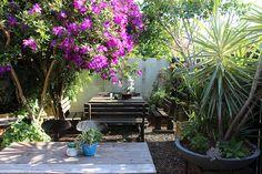 Carport is Cannon Hill's best kept secret - a gem of a café set in a gorgeous garden oasis Kids Cafe, Dog Cafe, Garden Oasis, Town House, Cannon, Brisbane, Trips, Things To Do, House Ideas