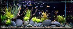 Freshwater Aquariums 1 by Aquarium Design Group | Blue Aquarium