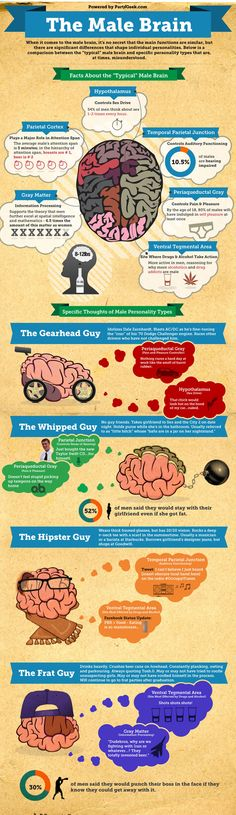 UNDERSTANDING HOW THE MALE BRAIN WORKS…OR DOESN'T WORK