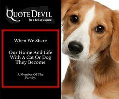 You & Your Pet Deserve: Quote Devil Cheap Pet Insurance That Provides Peace Of Mind Cheap Pet Insurance, Best Pet Insurance, Pet Insurance Quotes, Cat Health, Peace Of Mind, Devil, Your Pet