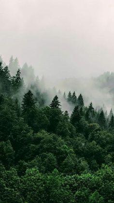 Wald Wallpaper, Natur Wallpaper, Tree Wallpaper, Wallpaper Desktop, Painting Wallpaper, Wallpaper Backgrounds, Girl Wallpaper, Forest Wallpaper Iphone, Green Nature Wallpaper