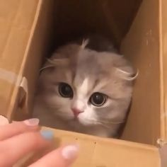 Come out cutie. Come out cutie. Funny Cute Cats, Cute Baby Cats, Cute Little Animals, Cute Cats And Kittens, Cute Funny Animals, I Love Cats, Kittens Cutest, Cute Dogs, Kitty Cats
