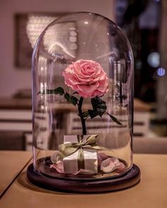 Beauty and The Beast Enchanted Rose Glass Dome LED Romantic Christmas Gift Decor for sale online Enchanted Rose, Flower Wallpaper, Iphone Wallpaper, Tout Rose, Forever Rose, Romantic Gifts, Pink Aesthetic, Belle Photo, Flower Arrangements