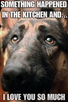 That look dogs have when they just know. They know they're in trouble.