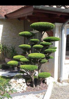 Japanese Garden Landscape, Garden Landscape Design, Landscape Art, Backyard Garden Design, Backyard Landscaping, Landscaping Ideas, Backyard Ideas, Amazing Gardens, Beautiful Gardens