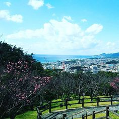 【yakiniku.nakama】さんのInstagramをピンしています。 《★ 28日29日の二日間、#名護桜祭り が開催されます❗️名護城跡の展望台からは名護湾の絶景が見渡せます✌️ ★  #nakama_okinawa #桜 #cheeryblossom #japan #nippon #日本 #琉球燒肉NAKAMA #琉球焼肉NAKAMA #沖縄 #OKINAWA #沖繩 #오키나와 #焼肉 #yakiniku #BBQ #烤肉 #燒肉 #불고기 #石垣牛 #あぐー豚 #オリオンビール #泡盛 #instafood #instagood #instatravel #instalike #like4like #photooftheday》