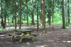 La forêt Chatel, Paris, Outdoor Furniture, Outdoor Decor, Photos, Home Decor, Drill Bit, Childhood, Pictures