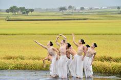 Cloud Gate's new work, Rice. #Taiwan  雲門舞集 「稻禾」