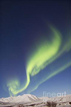Aurora Borealis wif moonlight over Ogilvie Mountains, Tomstone Park, Yukon_Canada