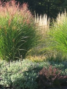 Grasses add so much movement and texture to the landscape.