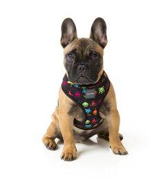 FuzzYard Space Raiders Dog Harness