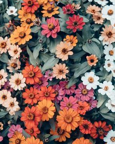 66 New ideas plants aesthetic photography - Flora - Pflanzen Summer Flowers, Beautiful Flowers, Flowers Nature, Colorful Flowers, Autumn Flowers, Colorful Plants, Nature Plants, Beautiful Beautiful, Exotic Flowers