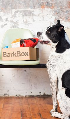 BARKBOX (bahrk-boks), noun: For dog lovers, BarkBox is a monthly box of paw-picked toys and all-natural treats (customized for dog size, allergies, and heavy chewers). For pups, it's the joy of a thousand belly scratches. For mailmen, it's burying the bone and hatchet. Get a BarkBox belly scratch now!