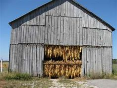 Tobacco barn...I remember working the tobacco field riding the planter, picking suckers, tended it all summer, then you cut it, hung it in the barn to cure before stripping the leaves.