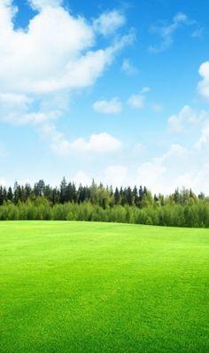 快晴時の草原のiPhone壁紙 | 壁紙キングダム スマホ版