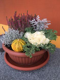 Spring Home Decor, Fall Decor, Garden Planters, Planter Pots, Tropical Patio, Garden Oasis, Winter Flowers, Outdoor Landscaping, Container Gardening
