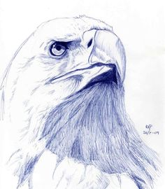 Eagle sketch by ~Mathema on deviantART