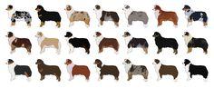 lots of australian shepherd cartoon dogs