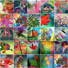 Brilliantly colored autumn collage by LH Dumes Collages, Color Collage, Autumn Scenes, Beautiful Collage, Halloween Pictures, Color Of Life, Color Pallets, Leaf Design, Land Scape