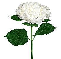 Bulk Hydrangeas For Sale - Sam's Club Cut Flowers, Fresh Flowers, Beautiful Flowers, Hydrangea Flower, White Hydrangeas, Flower Vases, Thing 1, Make Arrangements, Classic Elegance