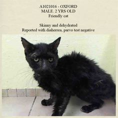 ***Pulled (unknown rescue)*** :)  NYC **SWEETY***2 Years!!! TO BE DESTROYED 11/22/14 OXFORD. This precious boy is SO AFFECTIONATE that he got the BEST BEHAVIOR RATING!!! He's still young and he'll shine once he gets the TLC he deserves!!! ID #A1021016. Male black about 2 YRS HOARDING. I came in with Group/Litter #K14-201803. https://www.facebook.com/nycurgentcats/photos/a.901395253211796.1073742513.220724831278845/901395553211766/?type=3&theater