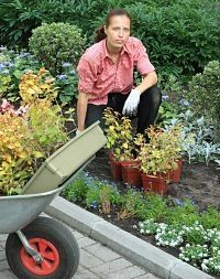 How to start a backyard nursery and make money off your plants ideas for a big or small for How to start a backyard garden