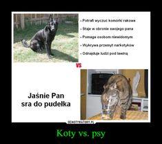 Koty vs. psy – Potrafi wyczuć komórki rakowe- Staje w obronie swojego panaPomaga osobom niewidomym- Wykrywa przemyt narkotykówOdnajduje ludzi pod lawinąVSㄈJaśnie Pansra do pudełka