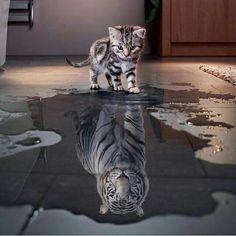 Un lindo gatito #enelfondoestatufuerza #tigre #blanco