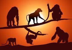 Bildergebnis für monkey silhouette