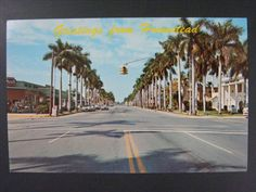 Homestead Florida FL Krome Ave Street Palm Trees Vintage VTG Postcard c1960s