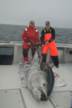 Catch of a Lifetime  Tuna skippers last season were allowed to keep one fish; regulations could change next year. Swedish angler Thomas Pe...