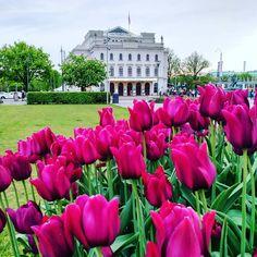Spring is finally coming in Gothenburg���� ~ ~ ~ #flowers #flower #petal #petals #nature #beautiful #love #pretty #plants #blossom #sopretty #spring #summer #flowerstagram #flowersofinstagram #flowerstyles_gf #flowerslovers #flowerporn #botanical #floral #florals #insta_pick_blossom #flowermagic #instablooms #bloom #blooms #botanical #floweroftheday http://gelinshop.com/ipost/1518842745312874629/?code=BUUA24ADZCF