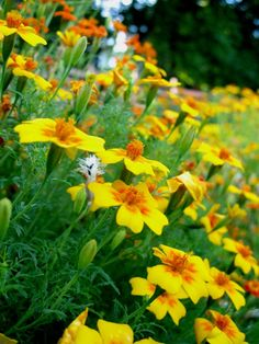 Garden of Orecchiella Park.