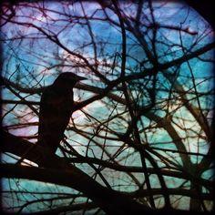 crow raven bird tree night art print branches blue by SherriConley