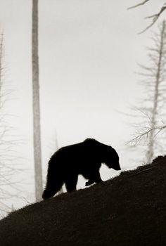 this is pookie bear.