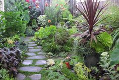 succulent garden design plans - Google Search