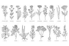Medical Herbs Vector Set by TopVectors on @creativemarket