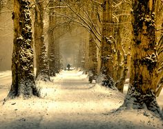 Wilhelmshaven, Germany (photo by harryja) -- I would so love to take this walk...