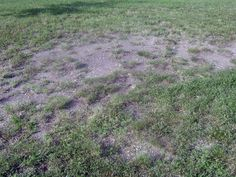 Nothing adds more curb appeal to your home than a beautiful, lush, well-manicured lawn. But sometimes droughts, fungi, insects, or other problems can wreak havoc, turning the green sea of grass into a mishmash of ugly brown spots, wilted blades, or matted