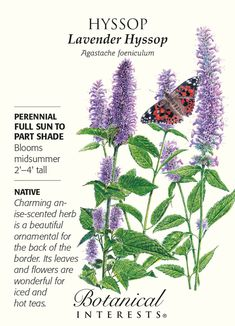 Hyssop Lavender Seeds - 250 mg - Perennial Perennial. Also known as anise hyssop and licorice mint, House Plants For Sale, Plants For Sale Online, Planting Bulbs, Planting Flowers, Permaculture, Lavender Seeds, Lavender Blue, House Plant Delivery, Full Sun Perennials