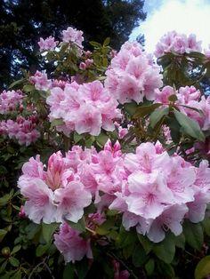 (*) Twitter Travel Deals, Valentines Day, Gardens, Canada, Victoria, Twitter, Flowers, Plants, Wonderful Flowers
